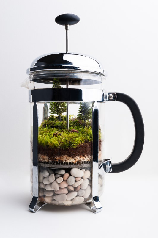 coffe-press-terrarium-532x800